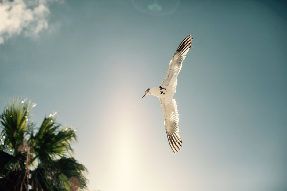Bird in Flight and Palm Tree Florida Keys